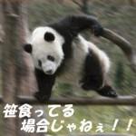 パンダが笹を食べる理由とは!?