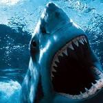 サメの種類だっていろいろ。恐いのデカイのキモイの!