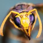 スズメバチの巣ってどこにあるの?もし刺されたら!?