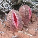 危険な植物たち!殺人植物の恐怖…。