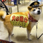 消防団犬ココはどんな仕事をしてる?犬種・性格は?