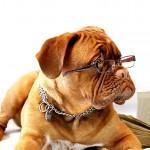 認知症は犬にも起きる!どんな症状で、原因と予防法は?