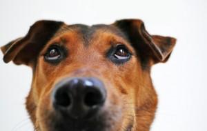 dog-838240_1280
