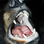 クマに襲われたら!?危険な時期、対策と生息地も!!