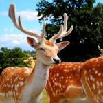 トナカイと鹿は同じ?違う?比較してみた!