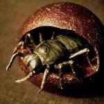 絶滅した古代の巨大生物たち!巨大な虫が迫り来る!!