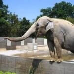 世界の奇妙な動物園&水族館!!人気とか事故なんか気にしない!?