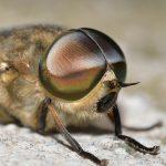ハチ、アブ、ハエ、ブヨ…。違い、見分け方は!?刺された時の対処法は!?