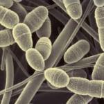 虫歯菌が脳の病気を引き起こす!?感染経路はどこから??