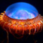 発光する深海生物たち!!光る理由・仕組みとは!?