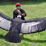 世界一大きな鳥はどれだ!?【図鑑】巨大鳥が走る!空を舞う!!