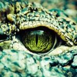 ペットに爬虫類、いかがですか?