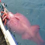 【画像】巨大魚を追え!