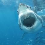 海の危険生物ランキング!