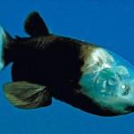 【画像】奇妙な深海生物を紹介します