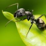 アリのいろんな種類をご紹介。「アリだー!!」