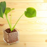 観葉植物の種類と育て方!実体験に基づいています。