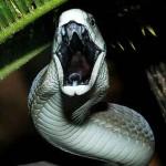 最強の毒蛇は?【画像】ランキングにできなかった…。