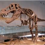 【画像】ティラノサウルスの最新情報!日本にもいた!