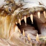 危険な魚がいっぱい!ギョギョ!!(古)