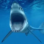 ホオジロザメ、シュモクザメ、アオザメ…!もしサメに出会ったら!?