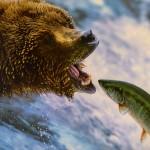 鮭とサーモンの違いとは!?意外っちゃ意外かも…。