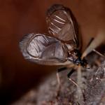 鈴虫の鳴き声はどうやってる?とか、鈴虫の疑問。