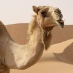 砂漠に住む生物たち!水分、適応はどうしてる!?