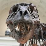 最強の恐竜はどいつだ!?恐竜時代の巨大生物たち!!