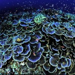 サンゴって動物、植物どっち!?理由はなぜ??