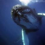 クジラの種類図鑑!大きさハンパねぇ!!