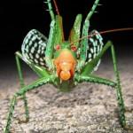 最強の虫はどれだ!?ランキングにはできぬ…。