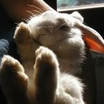 ウサギの意外な性格と特徴について。実は超◯◯!?
