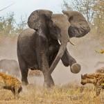 インドでゾウが大暴れ!!ゾウが本気を出すとこうなるw
