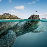 ガラパゴス諸島の生物たち【画像】!!独自の進化を遂げた生物の宝庫だった。