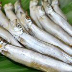 シシャモは偽者だらけ!?シシャモに似てる魚「カペリン」との違いとは?