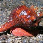 貝の種類図鑑!食用貝から巨大貝、危険な貝までヌルッとお目見え!!