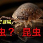 昆虫と虫の違いとは!?クモとかムカデ、カタツムリは何の仲間??